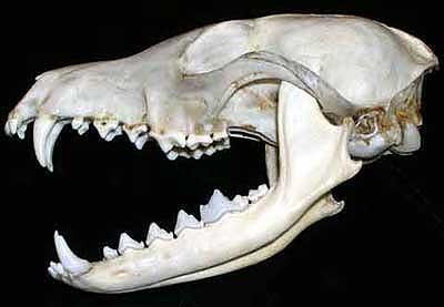 Pengetahuan Tentang Gigi Hewan